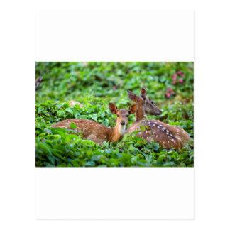 Jovem corça bonito do bebê que encontra-se para cartão postal