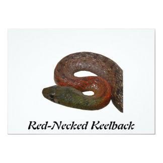 Keelback de pescoço encarnado convite