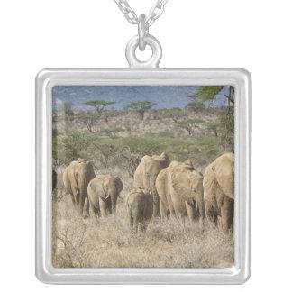 Kenya, reserva nacional de Samburu. Elefantes Colar Banhado A Prata