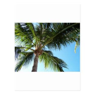 Key West Cartão Postal