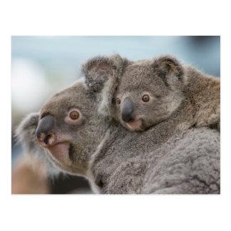 Koala doce cartão postal