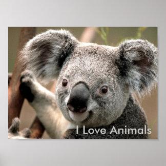 Koala, eu amo animais poster