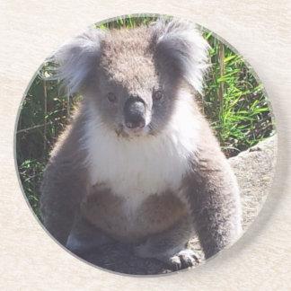 Koala no selvagem porta-copos