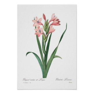 Laccatus do tipo de flor posteres