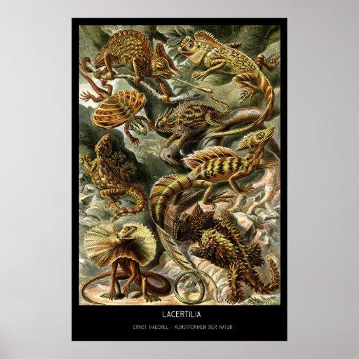 Lacertilia - placa 79 - der Natur de Kunstformen Posteres