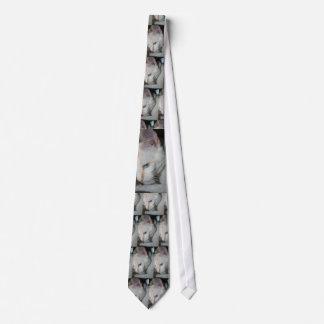 Laço, gato branco gravata