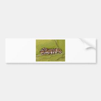 lagarta adesivo para carro