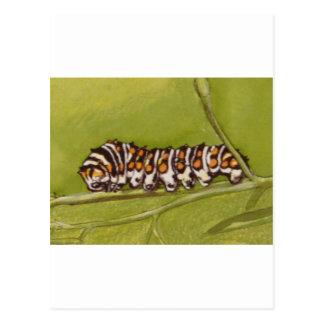 lagarta cartão postal