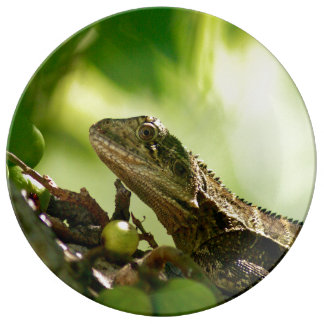 Lagarto australiano que esconde entre as folhas, pratos de porcelana