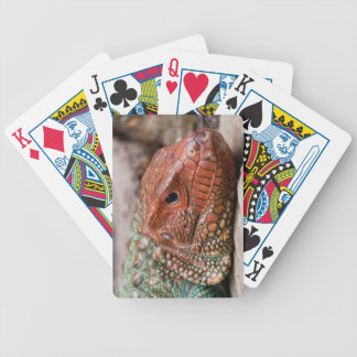 Lagarto Baralhos Para Pôquer