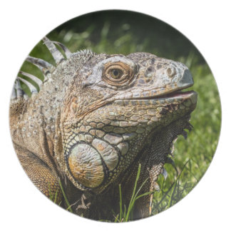Lagarto da iguana prato