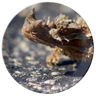 Lagarto espinhoso do diabo, interior Austrália, Pratos De Porcelana