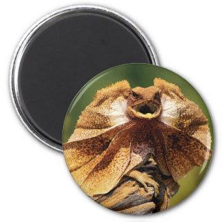lagarto frilled ímã redondo 5.08cm