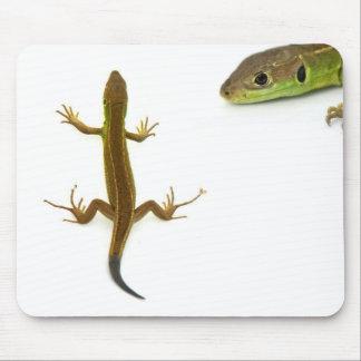 lagarto mousepads