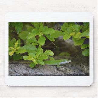 Lagarto verde-claro de Anole Mouse Pad