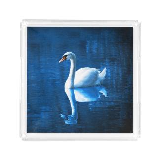 Lago branco elegante blue da calma da cisne