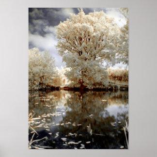 Lago branco nature das árvores do verão romântico pôster