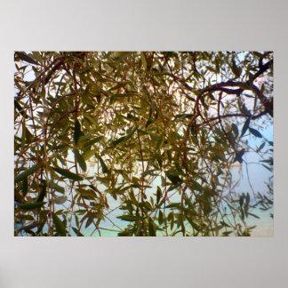 Lago Como ramo de oliveira Poster