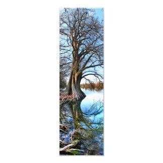 Lago Cypress 2 ladybird em Austin Texas Impressão De Foto