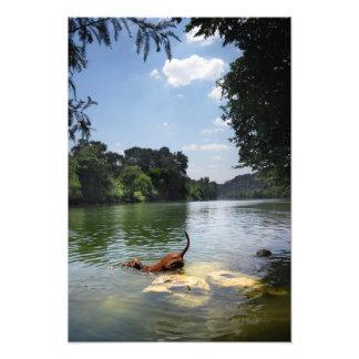 Lago ladybird da natação do cão - Austin do centro Impressão De Foto
