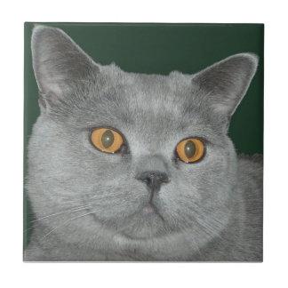 Laranja bonito azulejo Eyed do gatinho