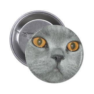 Laranja bonito botão Eyed do gatinho Bóton Redondo 5.08cm