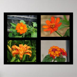 Laranja bonito da coleção das flores impressão