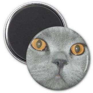 Laranja bonito gatinho Eyed Ímã Redondo 5.08cm