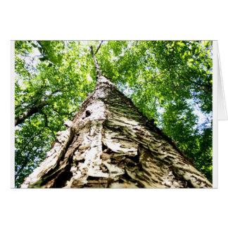 Latido de árvore cartões