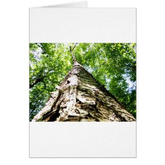 Latido de árvore cartão