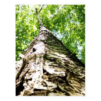 Latido de árvore cartões postais