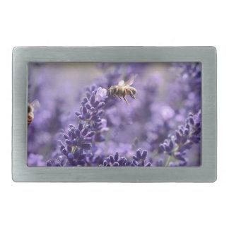 Lavanda do primavera com o floral roxo das abelhas