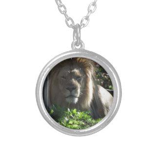 Leão africano colar banhado a prata