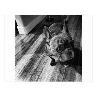 Leitão:) #dog#piglet#love#perra#cutie! cartão postal