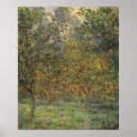 Lemon Grove em Bordighera por Claude Monet Posters