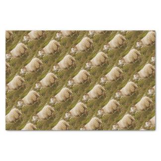 Lenço de papel islandês dos carneiros