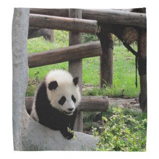 Lenço Fotografia da panda