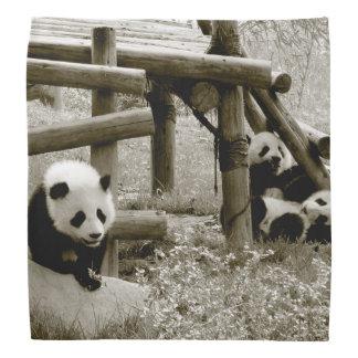 Lenço Panda. Bebê. Novo. Sepia Photogray
