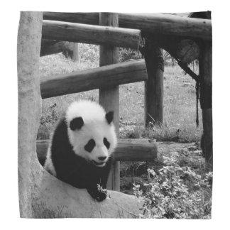 Lenço Panda - fotografia preto e branco