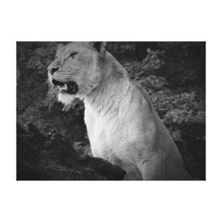 Leoa preto e branco impressão em canvas