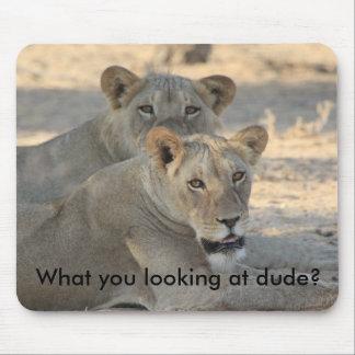 Leões engraçados mouse pad