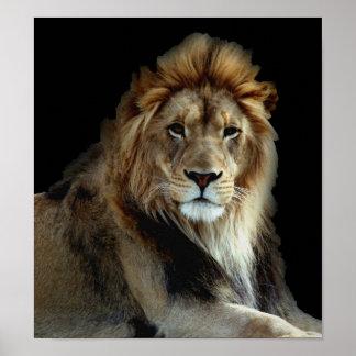 Leões selvagens do parque animal poster