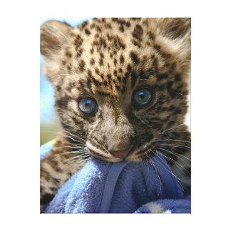 Leopardo do bebê com cobertura azul