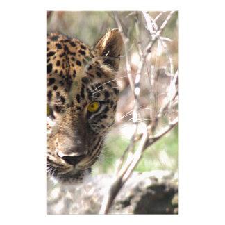 Leopardo escondendo papelaria