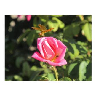 Libélula e joaninha no rosa do rosa cartao postal