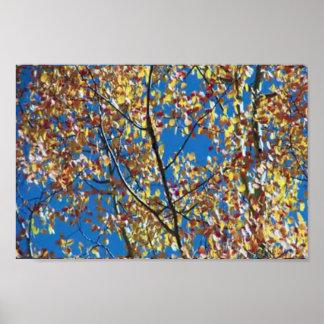 Linha de árvore cor olímpica de América da queda Poster