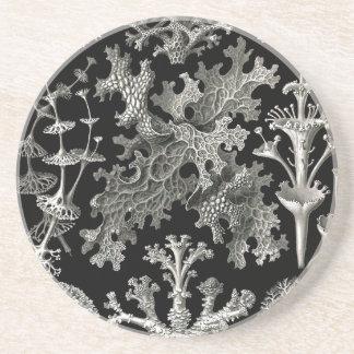 Líquenes de Ernst Haeckel Porta Copos De Arenito