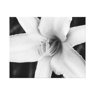 Lírio de dia preto e branco impressão em tela