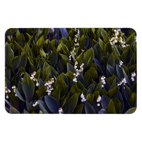 Lírio do remendo da flor do vale com matiz azul foto com ímã retangular