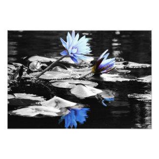 Lírios de água bonitos arte de fotos